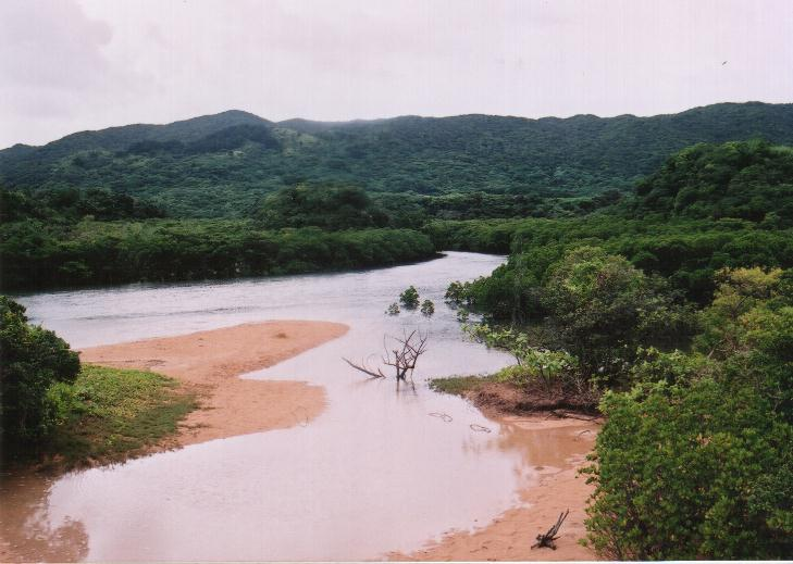 mangrove[1].jpg