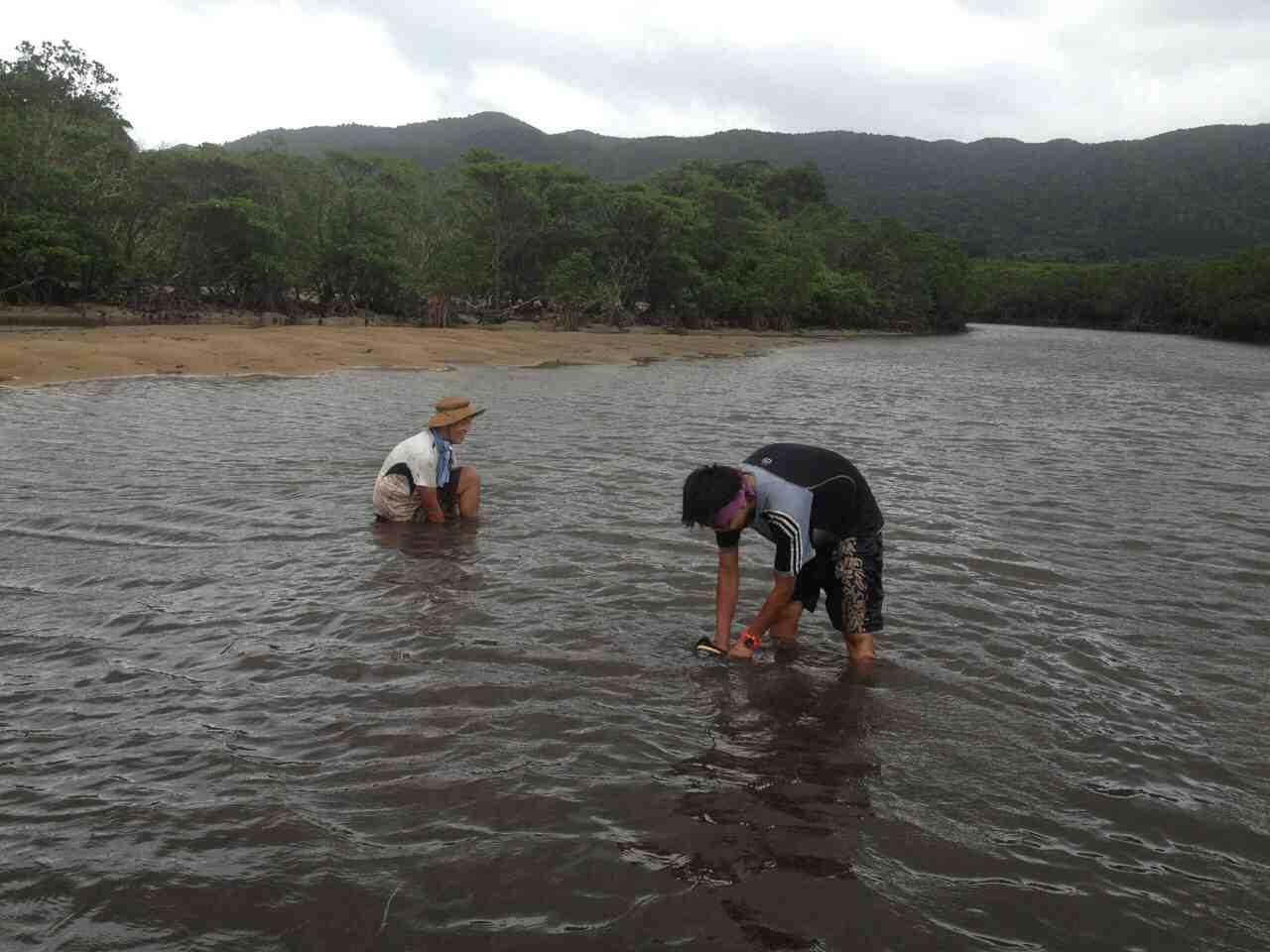 mangrove03.jpg